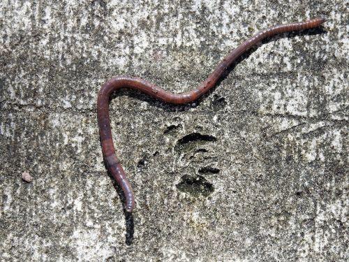 earth worm worm earthworm
