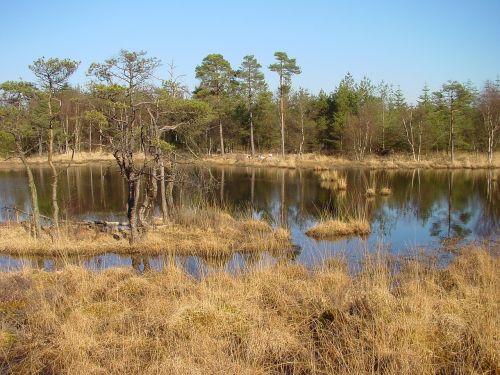 east frisia moor forest