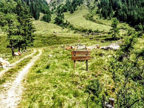 east tyrol debanttal tyrol