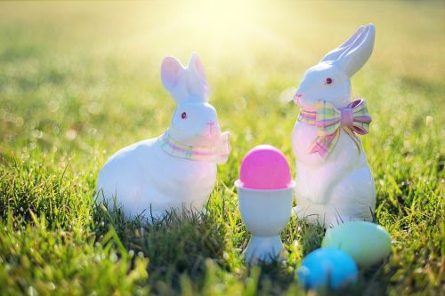 easter easter bunnies rabbits