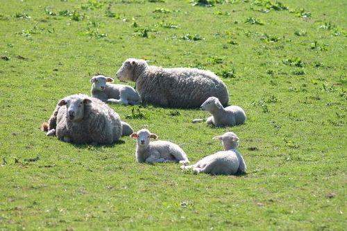 easter lamb easter lamb