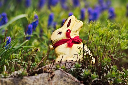 easter lindt gold bunny