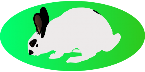 easter white rabbit green ellipse
