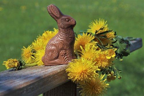 easter  rabbit  dandelion