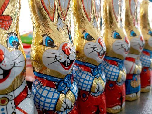 easter bunny chocolate bunny easter