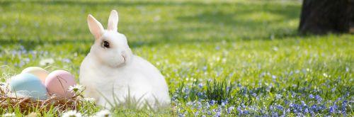 easter bunny easter nest egg