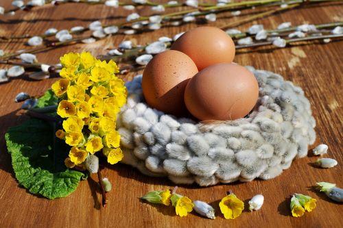 easter eggs egg eggshell