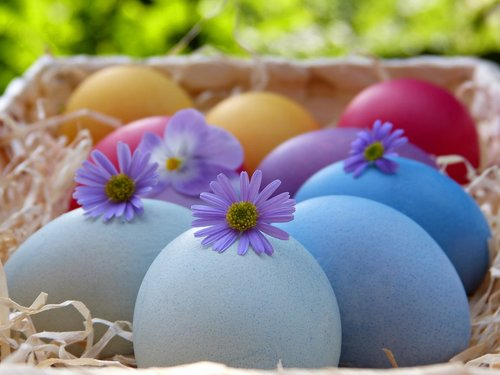 easter eggs  basket  colorful