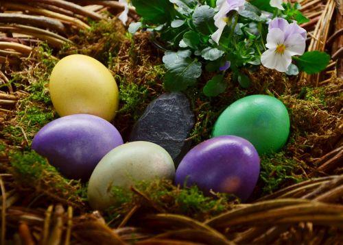 easter eggs egg colored
