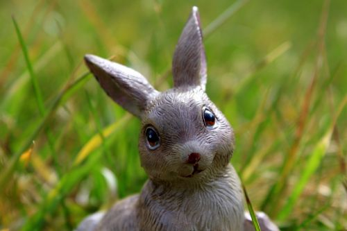 easter holidays bunny nature