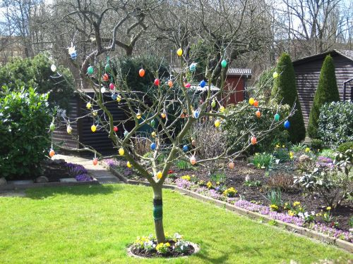 easter in the allotment easter eggs in the tree colorful easter eggs