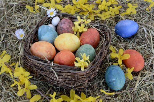 easter nest nest easter eggs