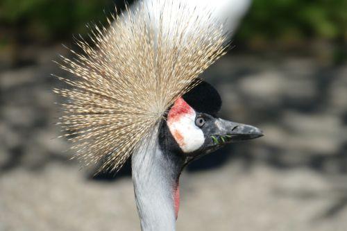 rytas,galva,galvos apdangalai,subtilus,Walsrode,parkas,makro,paukščių parkas Walsrode,paukštis