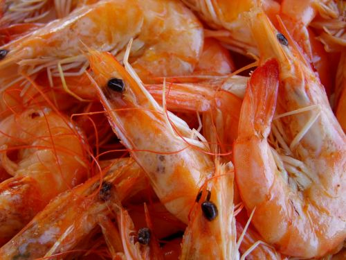 eat fish scampi