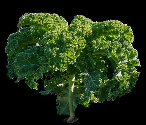 eat food vegetables