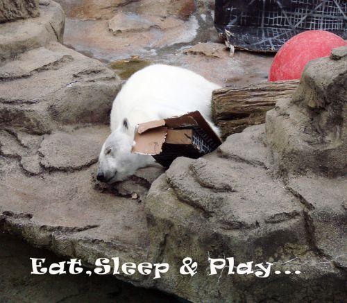 Eat Sleep & Play