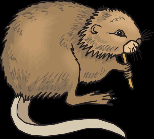 eating animal tail