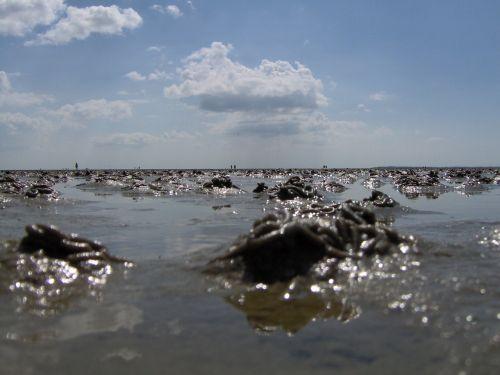ebb wadden sea watt bottom