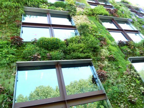 eco ecohaus plant