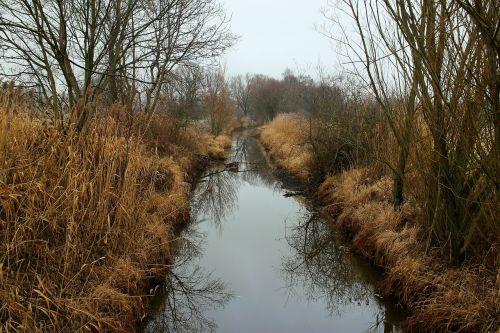 eco system biotope entwạ̈sserungskanal