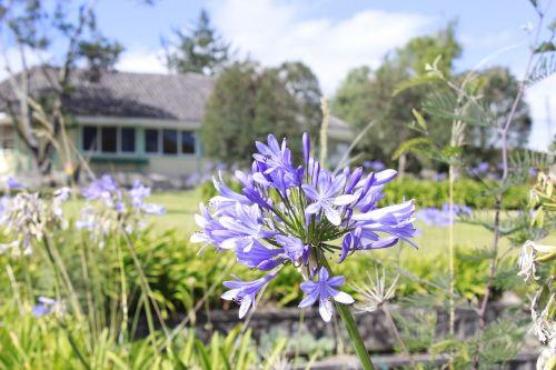 ecuador flower cabin