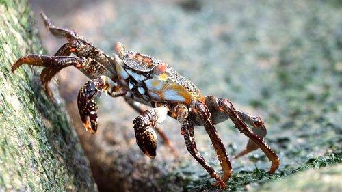 ecuador  cancer  shellfish