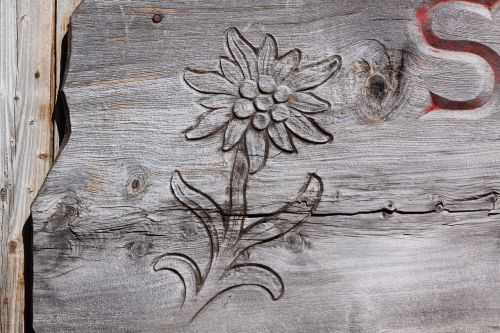 edelweiss carved engraving