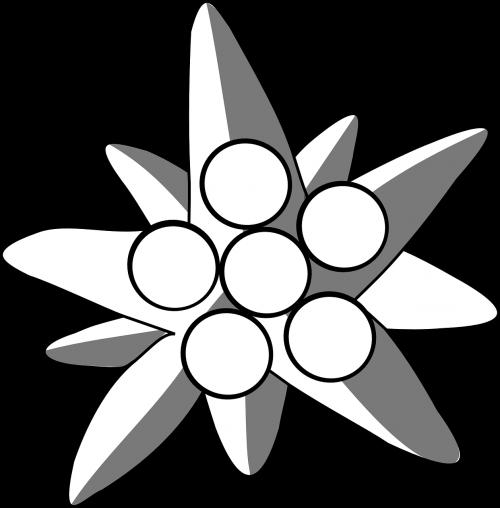 edelweiss flower plant