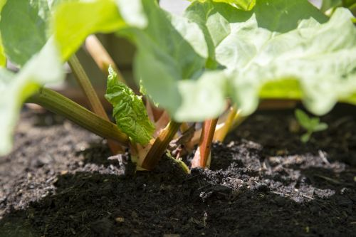 edible fresh garden