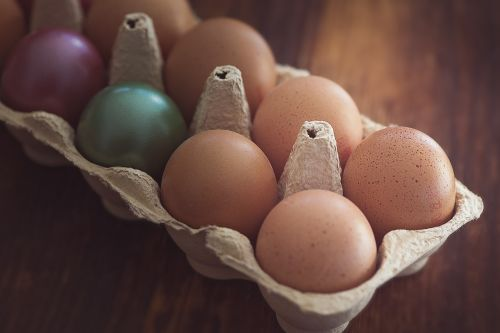 egg chicken eggs easter eggs