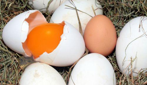 egg geese eggs hen's egg