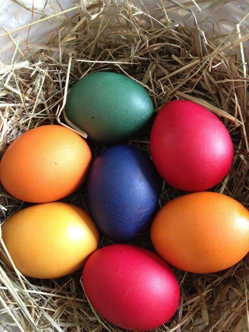 kiaušinis,Velykos,lizdas,Velykinis kiaušinis,spalvotas kiaušinis,spalvos,linksmų Velykų,spalva,Velykos tema,Velykinis sveikinimas,spalvinga