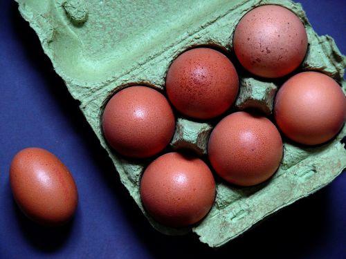egg egg carton chicken eggs