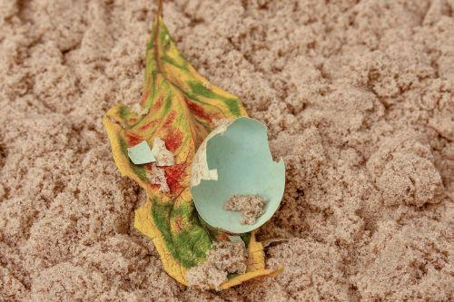 egg nature eggshell
