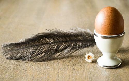 egg pen chamomile