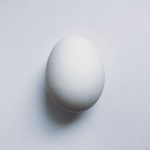 egg food protein
