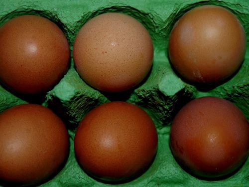 egg eggshell cardboard