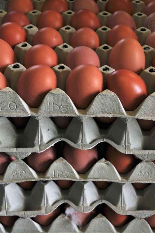egg chicken eggs hen's egg