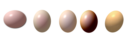 egg eggs drawing