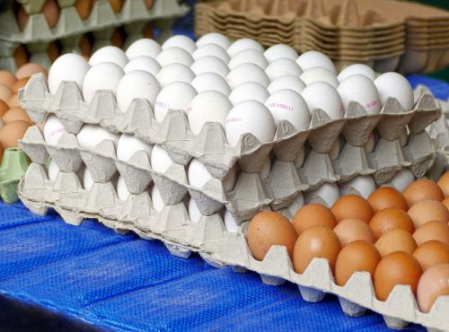 egg hen's egg egg carton