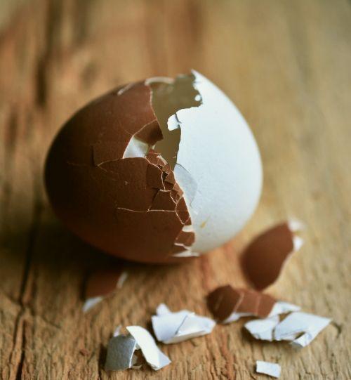 egg hen's egg eggshell