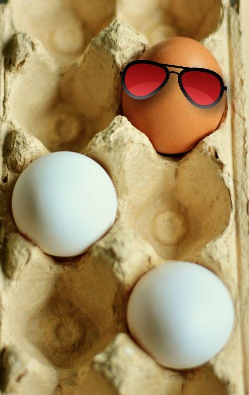 egg hen's egg brown eggs