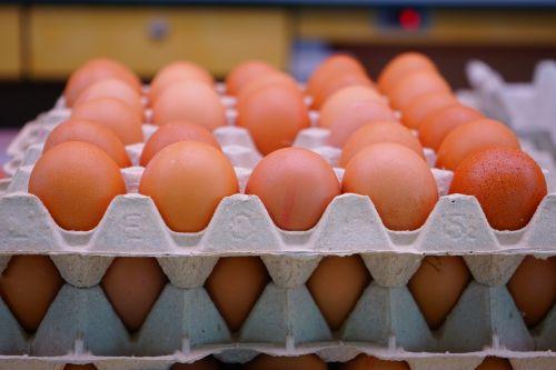 egg chicken eggs egg carton