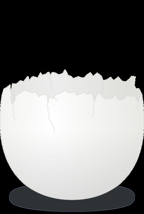 egg shell cracked