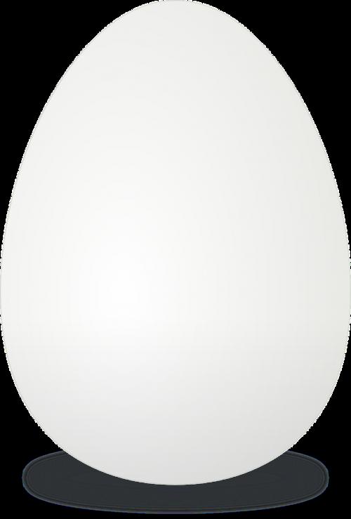 egg egg shell white