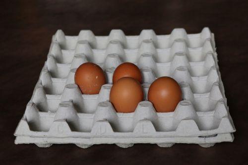 kiaušinis, kiaušinių dėklas, virtuvė, vištų kiaušinis, Velykos, be honoraro mokesčio