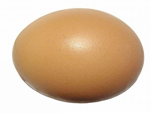 egg eggshell protein