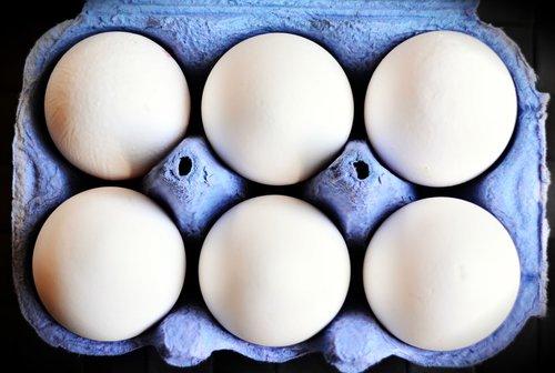 egg  egg carton  white eggs