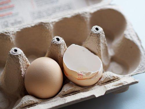 egg  eggshell  pack