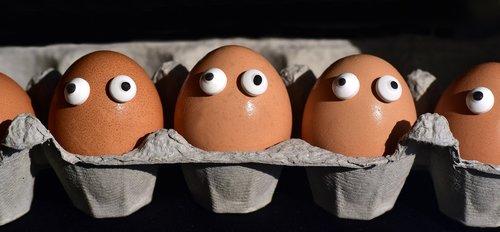 egg  egg box  egg carton